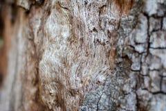 Тухлый driftwood Стоковые Изображения