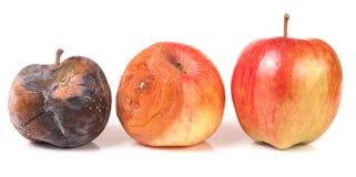 2 тухлых и одних хороших яблока изолированного на белой предпосылке Стоковые Изображения