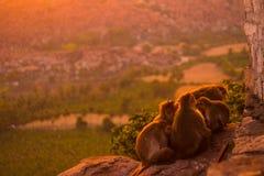 тучная обезьяна стоковое изображение rf
