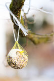 Тучный шарик как еда птицы Стоковая Фотография