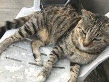 Тучный tomcat стоковые фото