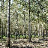 Тщательное лесохозяйство в Франции стоковые изображения rf