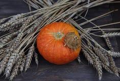 Тыква в соломенной шляпе с ушами пшеницы Стоковое Фото