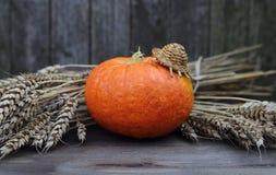 Тыква в соломенной шляпе с ушами пшеницы Стоковая Фотография