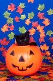 тыква голубого кота предпосылки черная стоковые изображения rf