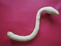 тыква змейки форменная над Бордо красным Стоковые Изображения RF