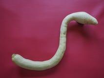 тыква змейки форменная над Бордо красным Стоковая Фотография RF