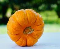 Тыква знак дня хеллоуина Стоковые Фото