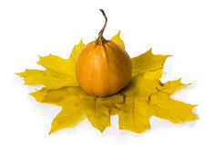 тыква листьев осени Стоковое Изображение