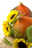 Тыква и солнцецветы стоковое фото rf