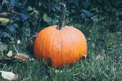 Тыква и упаденные листья Стоковое фото RF