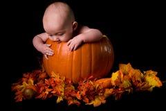 тыква младенца изолированная чернотой большая Стоковое Изображение