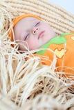 тыква младенца Стоковые Фотографии RF