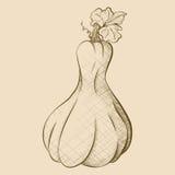 Тыква нарисованного вручную винтажного стиля высокорослая Стоковые Изображения