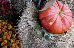 Тыква на сене с баками мам Стоковое Фото