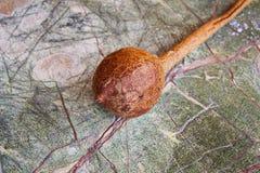 Тыква на таблице камня дождевого леса на моей органической террасе стоковая фотография rf