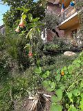 Тыква от моего органического сада стоковая фотография rf