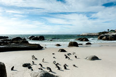 Тыква пингвина Стоковые Изображения