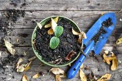 Тыква ростка Стоковое Фото