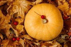 Тыква среди листьев осени стоковое фото rf