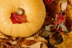 Тыква среди листьев осени стоковая фотография