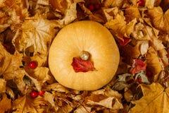 Тыква среди листьев осени стоковые изображения rf