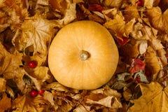 Тыква среди листьев осени стоковое фото