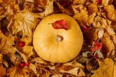 Тыква среди листьев осени стоковые фото