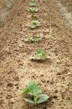 тыква урожая стоковая фотография rf