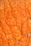 Тыква: Ухабистая кожа тыквы текстуры Стоковое Изображение RF