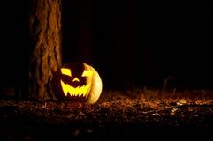 Тыква хеллоуина в лесе на ноче Стоковое Фото