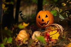 Тыква хеллоуина в лесе Стоковые Изображения RF