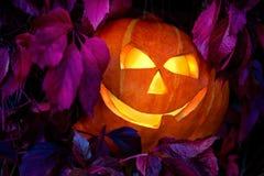 Тыква хеллоуина среди листьев одичалых виноградин Стоковые Фотографии RF