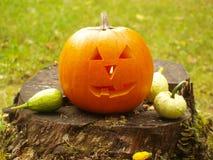 Тыква хеллоуина Стоковое Изображение RF