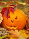 Тыква хеллоуина Стоковое фото RF