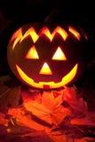 Тыква хеллоуина Стоковая Фотография