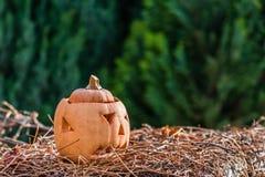 Тыква через немного дней после праздника helloween Стоковая Фотография