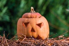 Тыква через немного дней после праздника helloween Стоковое Фото