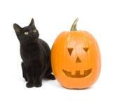 тыква черного кота стоковые изображения