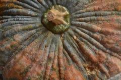 Тыква Стоковая Фотография RF