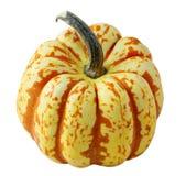 тыква gourd Стоковое Фото