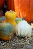 тыква gourd Стоковые Фото