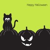тыква halloween черного кота Стоковые Изображения