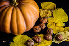 Тыква Haloween с фундуками листьев Стоковые Фотографии RF