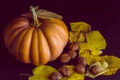 Тыква Haloween с фундуками листьев Стоковое Фото