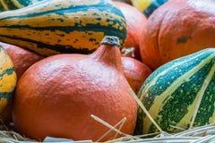 Тыквы апельсина, зеленых и желтых от стороны Стоковое Фото