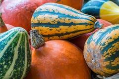 Тыквы апельсина, зеленых и желтых от стороны Стоковые Фотографии RF