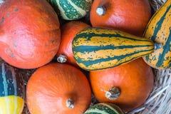 Тыквы апельсина, зеленых и желтых сверху Стоковые Изображения RF