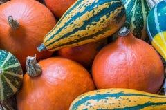 Тыквы апельсина, зеленых и желтых сверху Стоковое Изображение