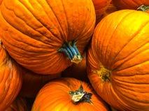 Тыквы, апельсин, падение и благодарение Стоковая Фотография